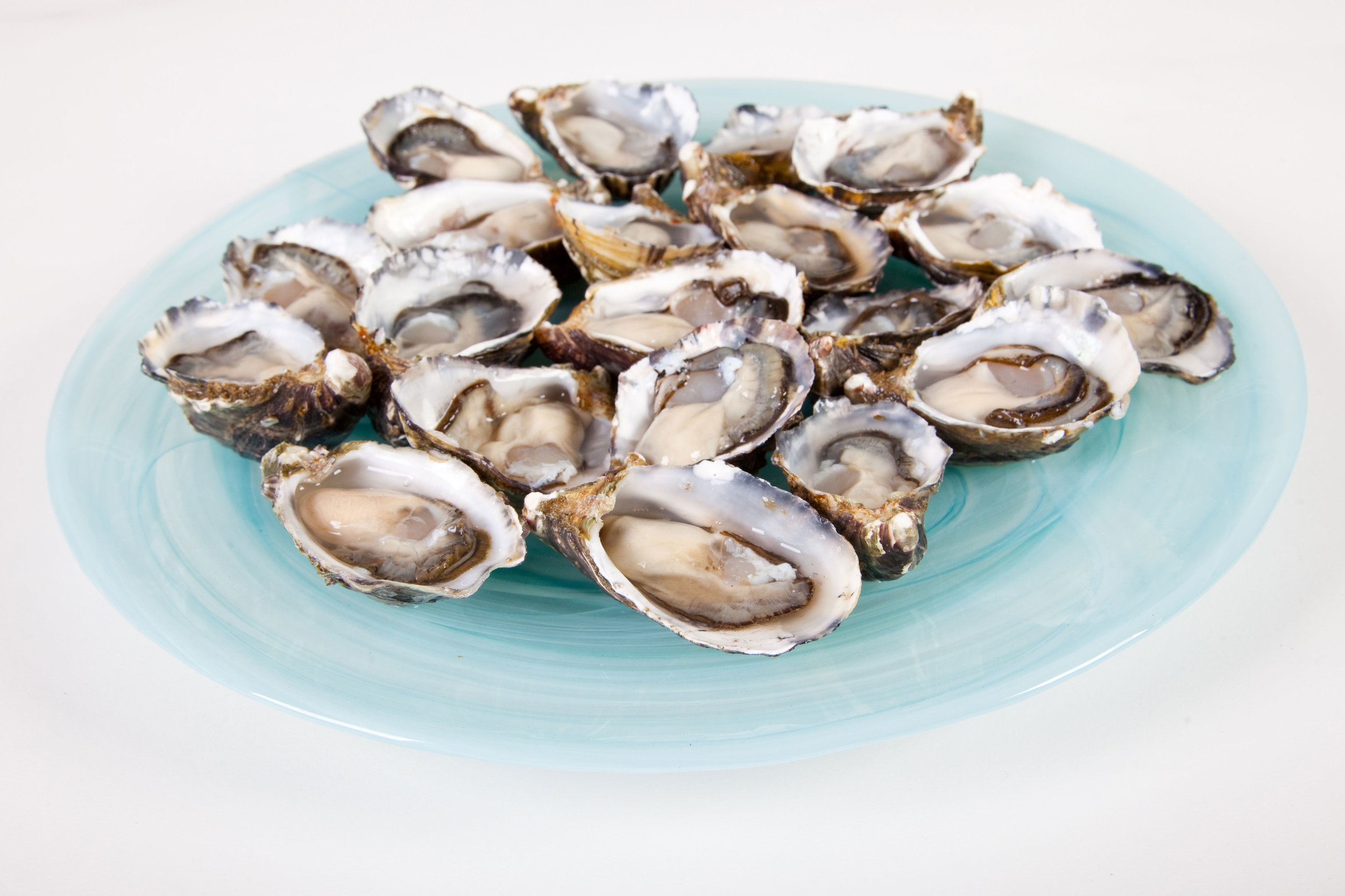 Pure Celebrations Oyster