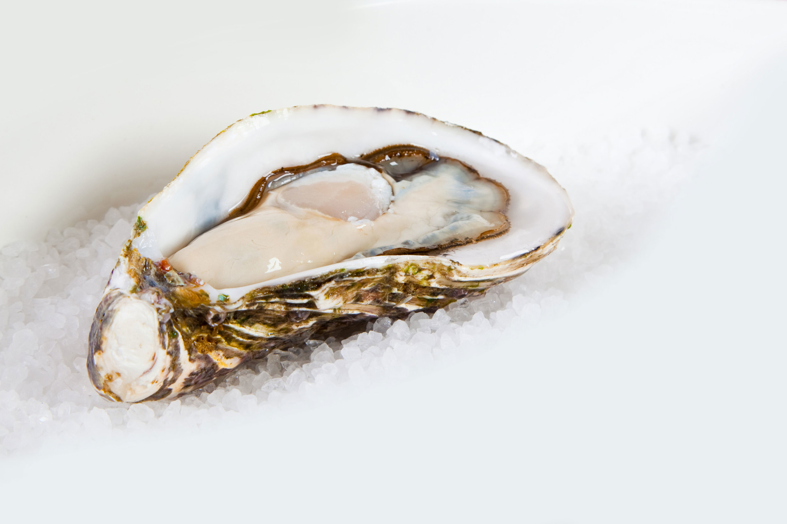 Pure Luxuries Oysters