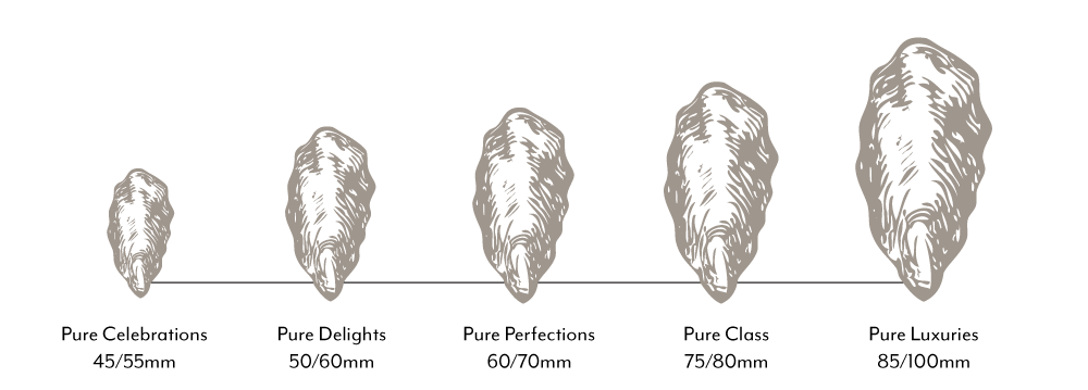 Oyster Size Guide