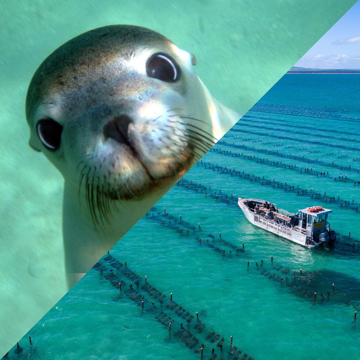 Sea Lion & Oyster Farm Tour.jpg