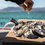 Fresh Coffin Bay Oysters