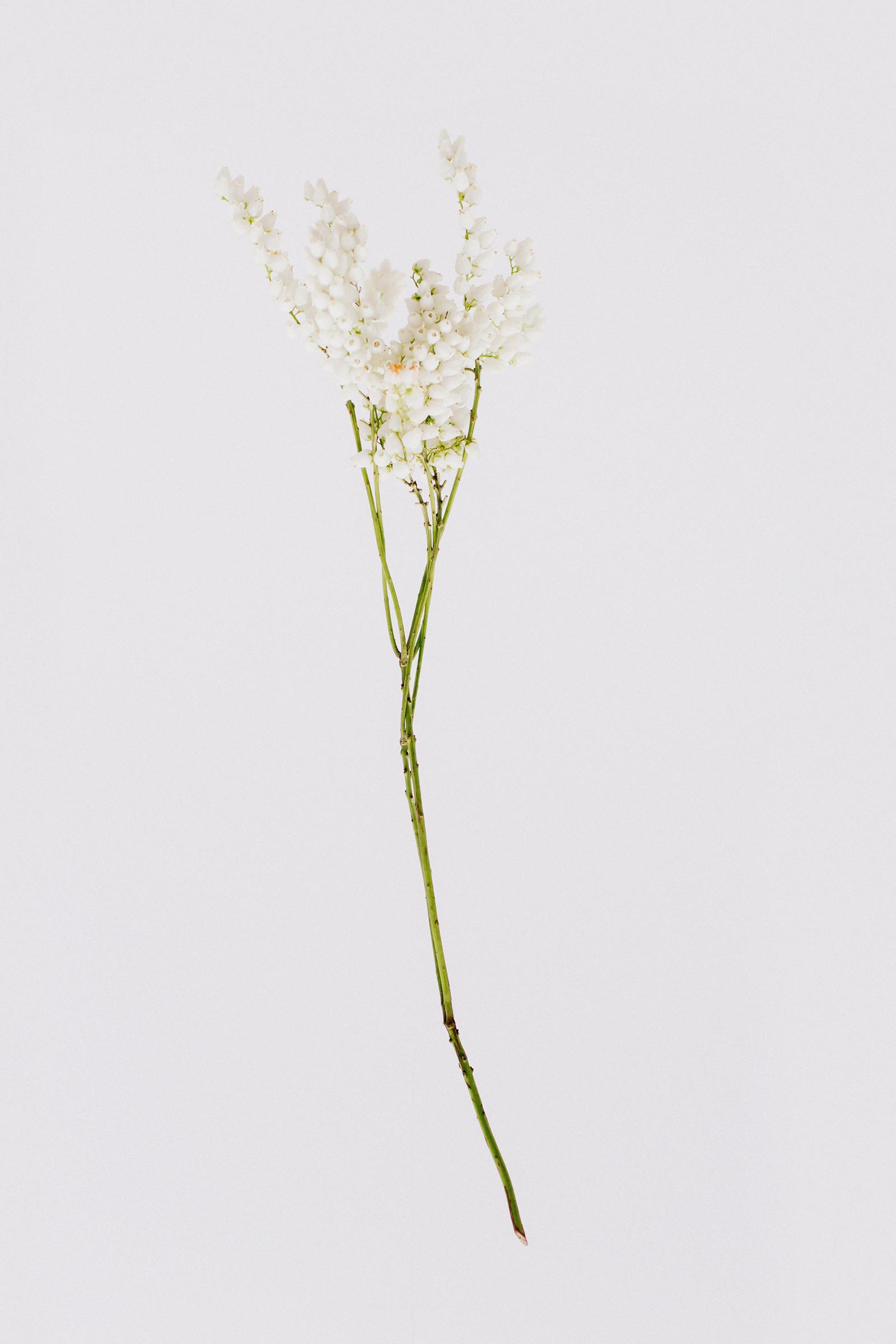 White-The-Robertsons-15.jpg