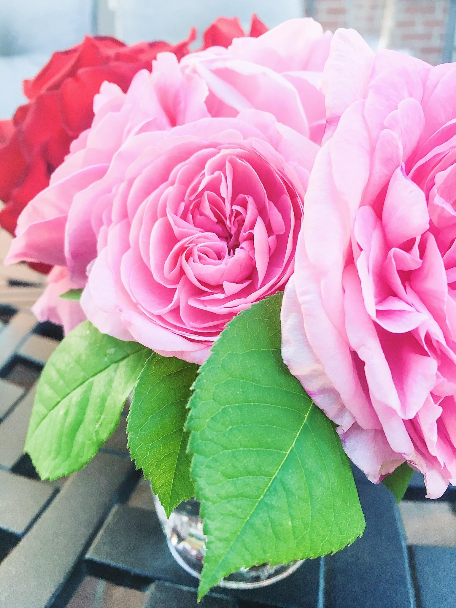 La Vie en rose. - Things are looking rosy...
