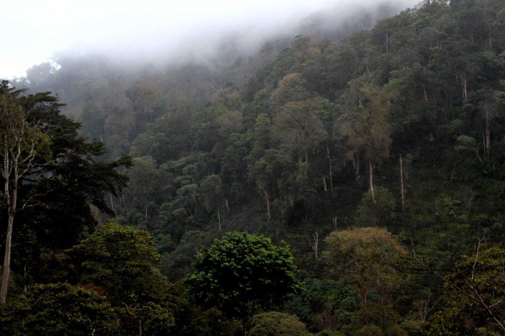 deforestation-free-1024x682.jpg