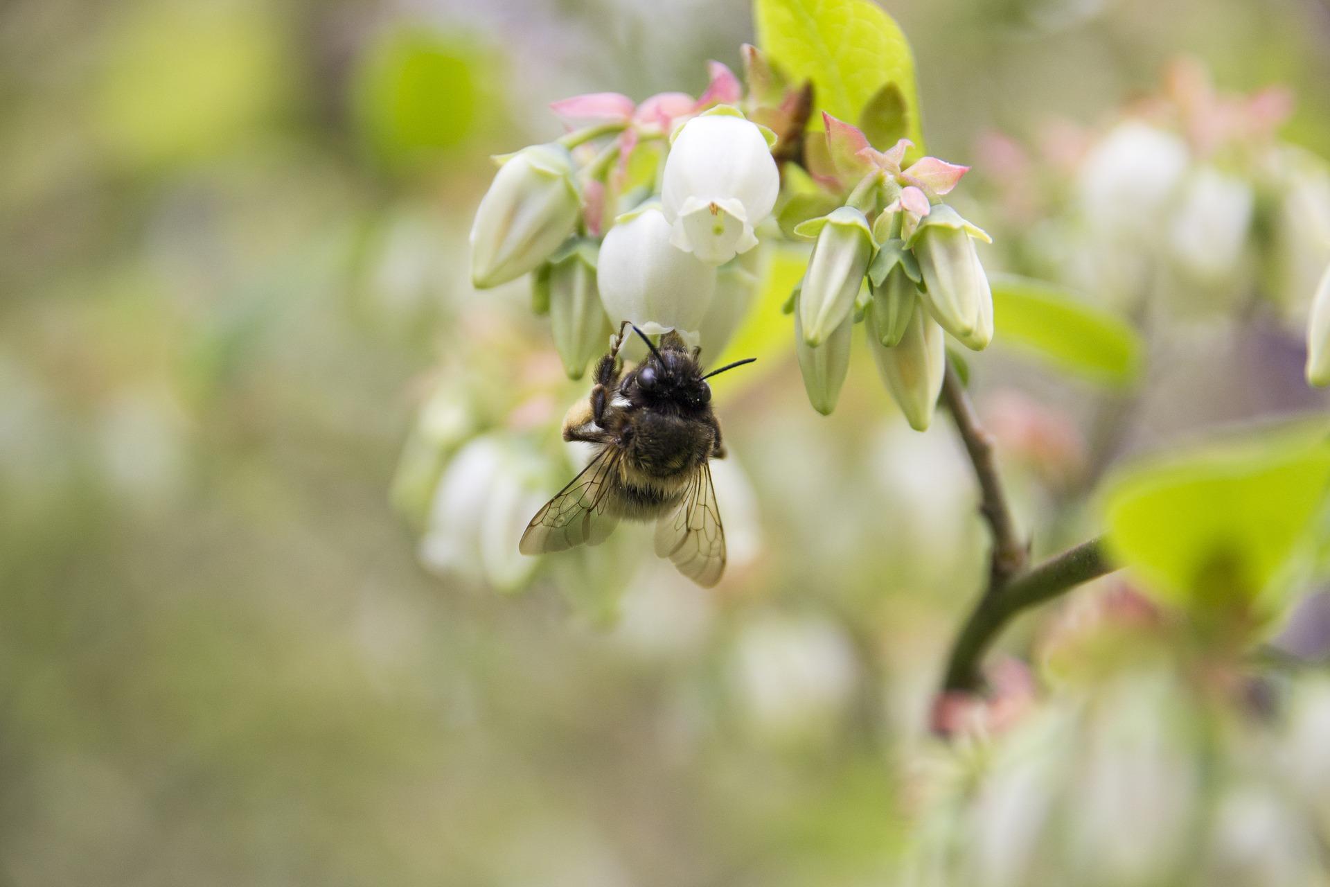 Syngenta-Bees.jpg