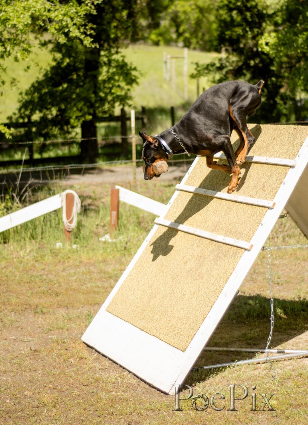 _schutzhund-8.jpg