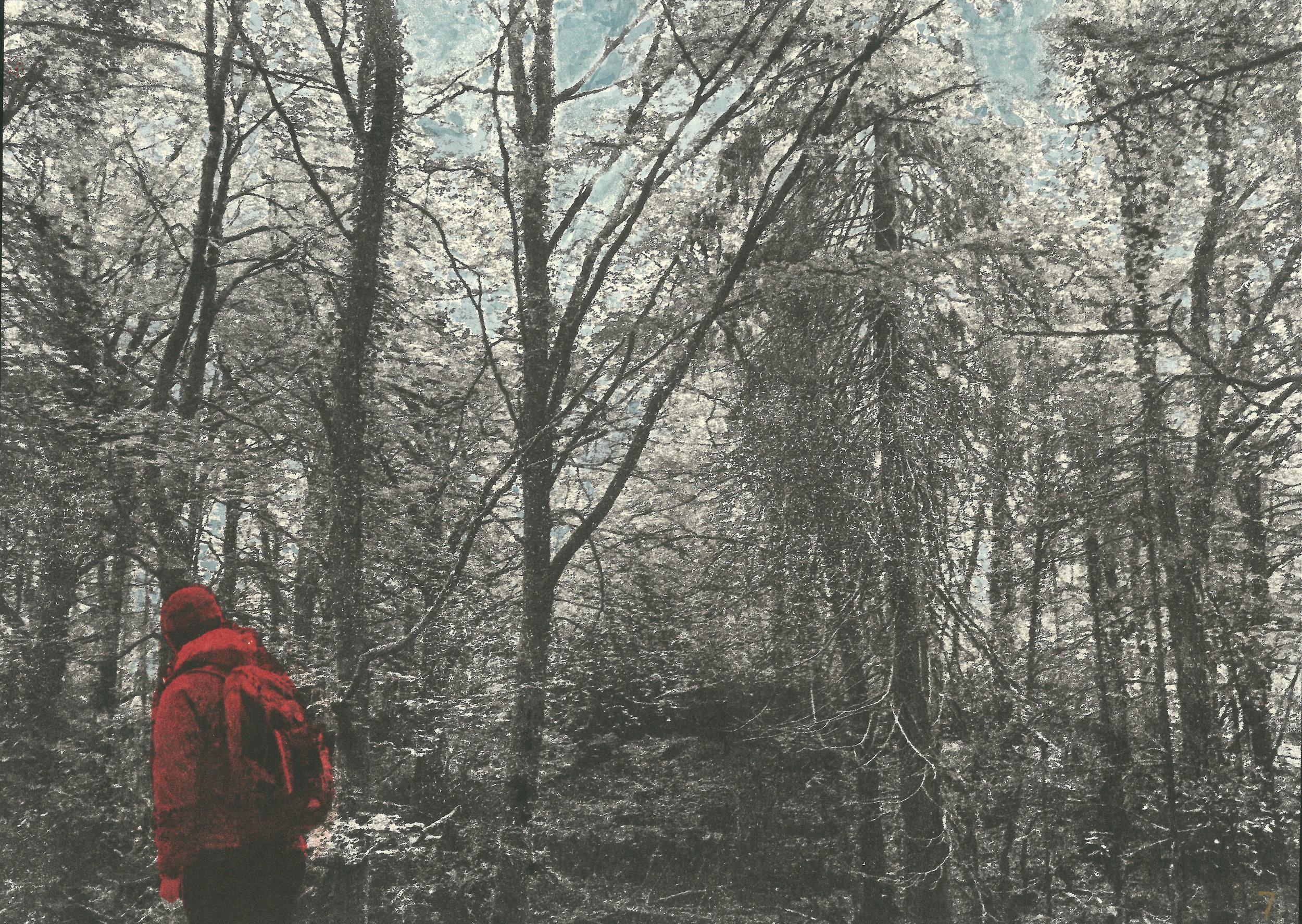 trees_300dpi.jpg