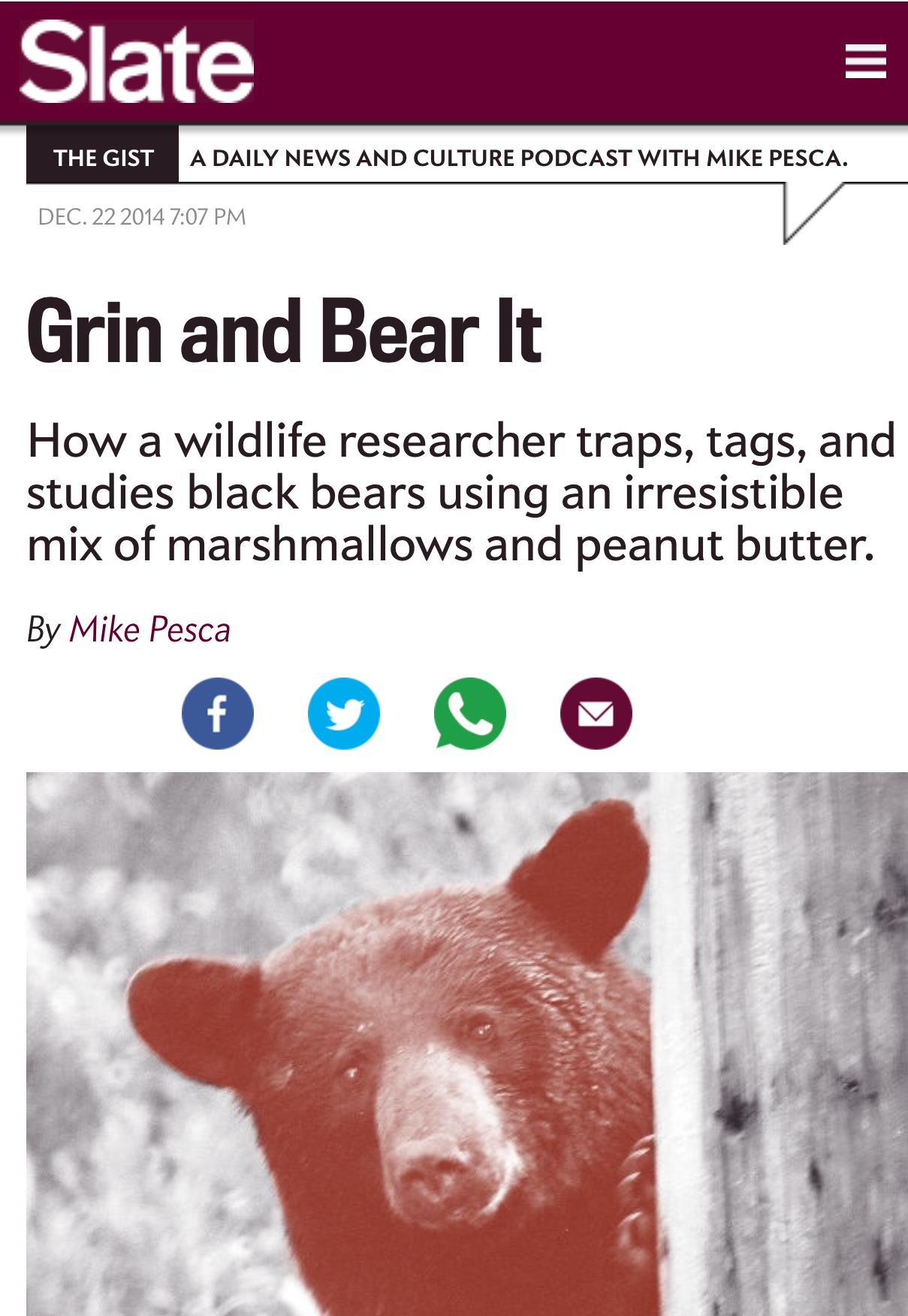 Slate: Bear News