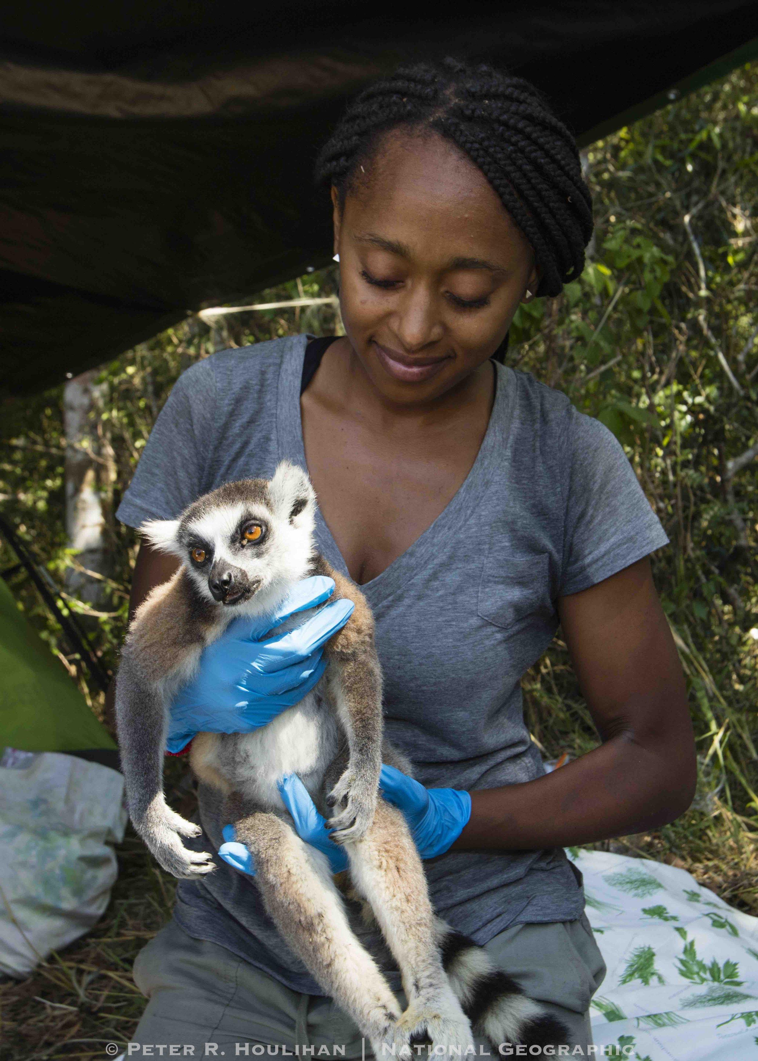 Behavior and Ecology of Ring-tailed lemurs - Ivohibory Forest, Madagascar