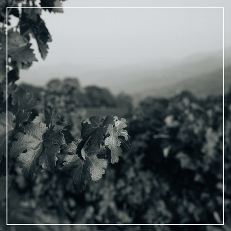 The Historic Roots of Boich Family Wine