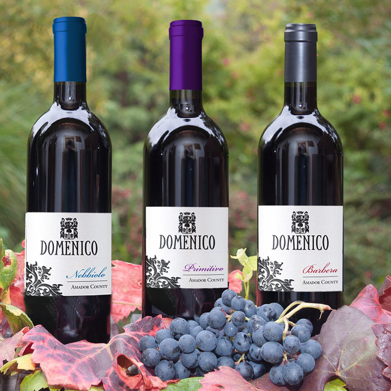 Cal-Ital Wine 101