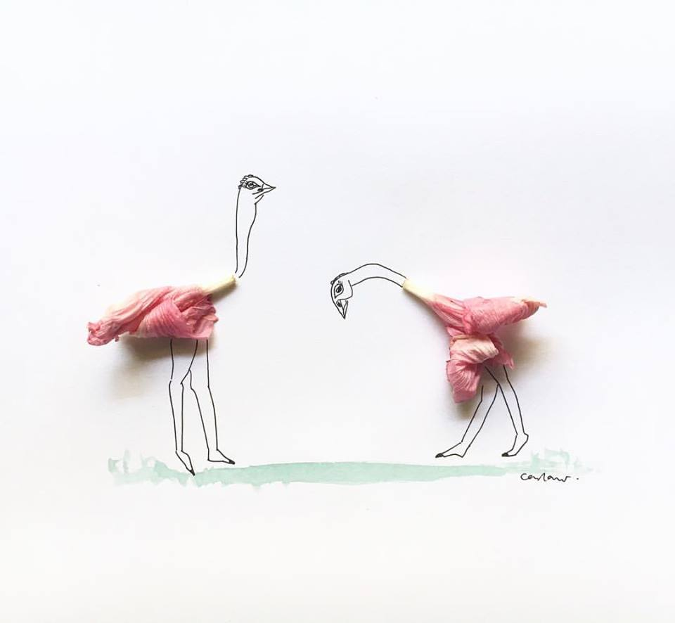 Take a bow... - Ostriches are the world's biggest birds but sadly grounded and flightless due to their sizes. So you know male ostriches are called cocks or roosters, and females are hens?I was gardening and picked up these two hibiscus blooms which brought on this image of dancing ostriches 🌸 #eattodraw