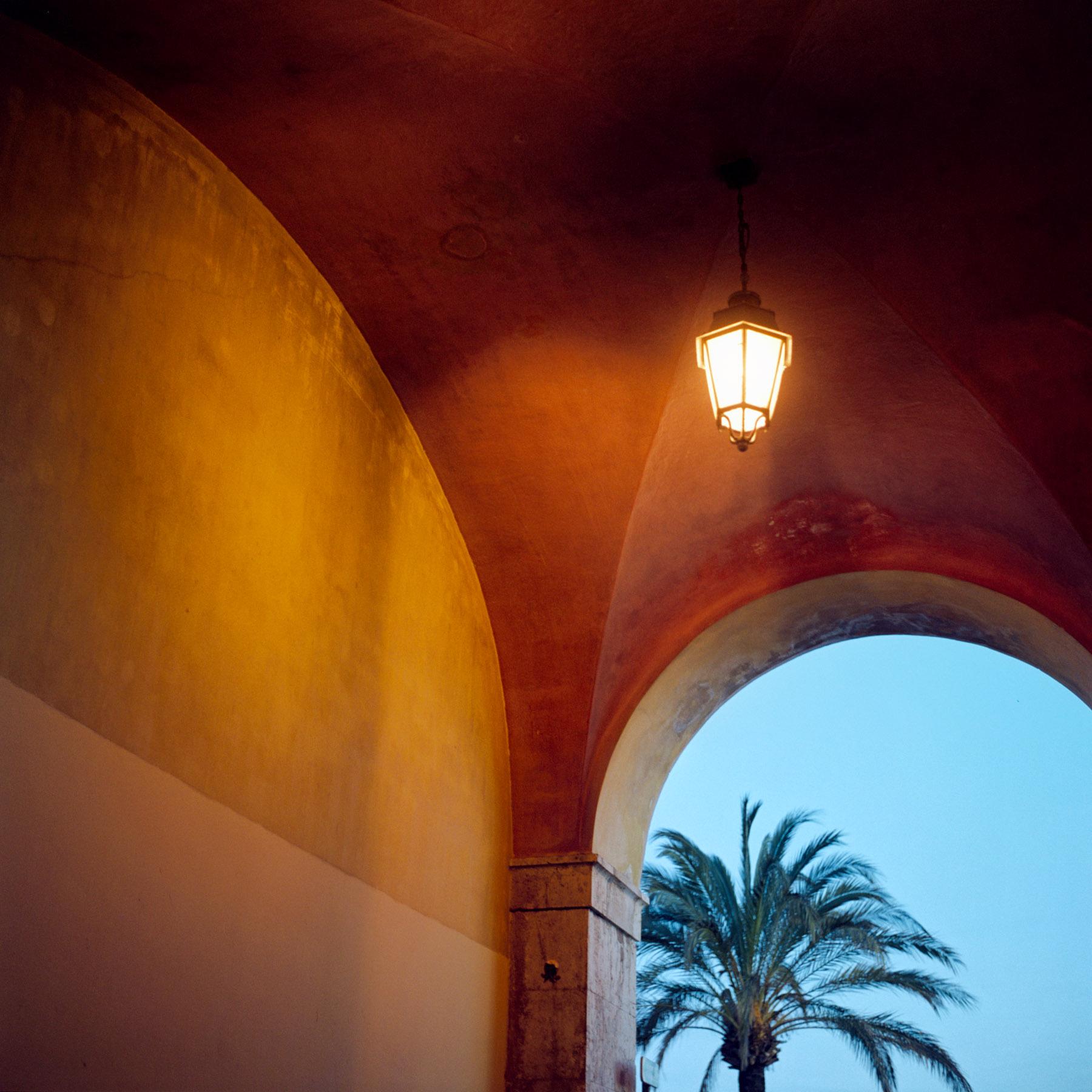 Palmier et trois couleurs
