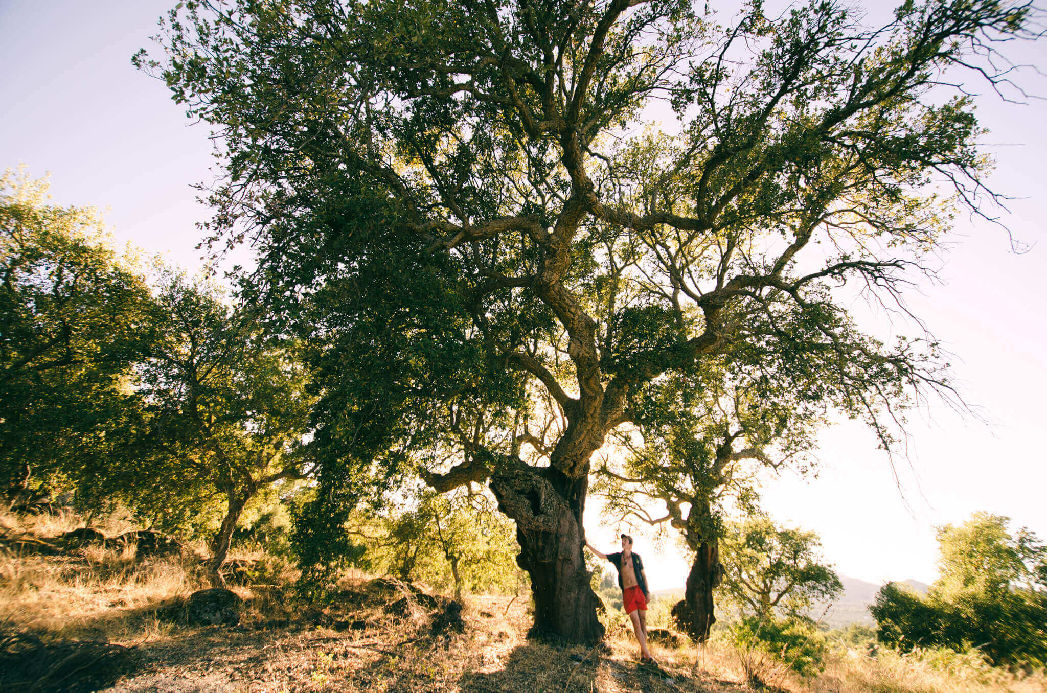 connecting-with-a-tree-breathe-portugal.jpg