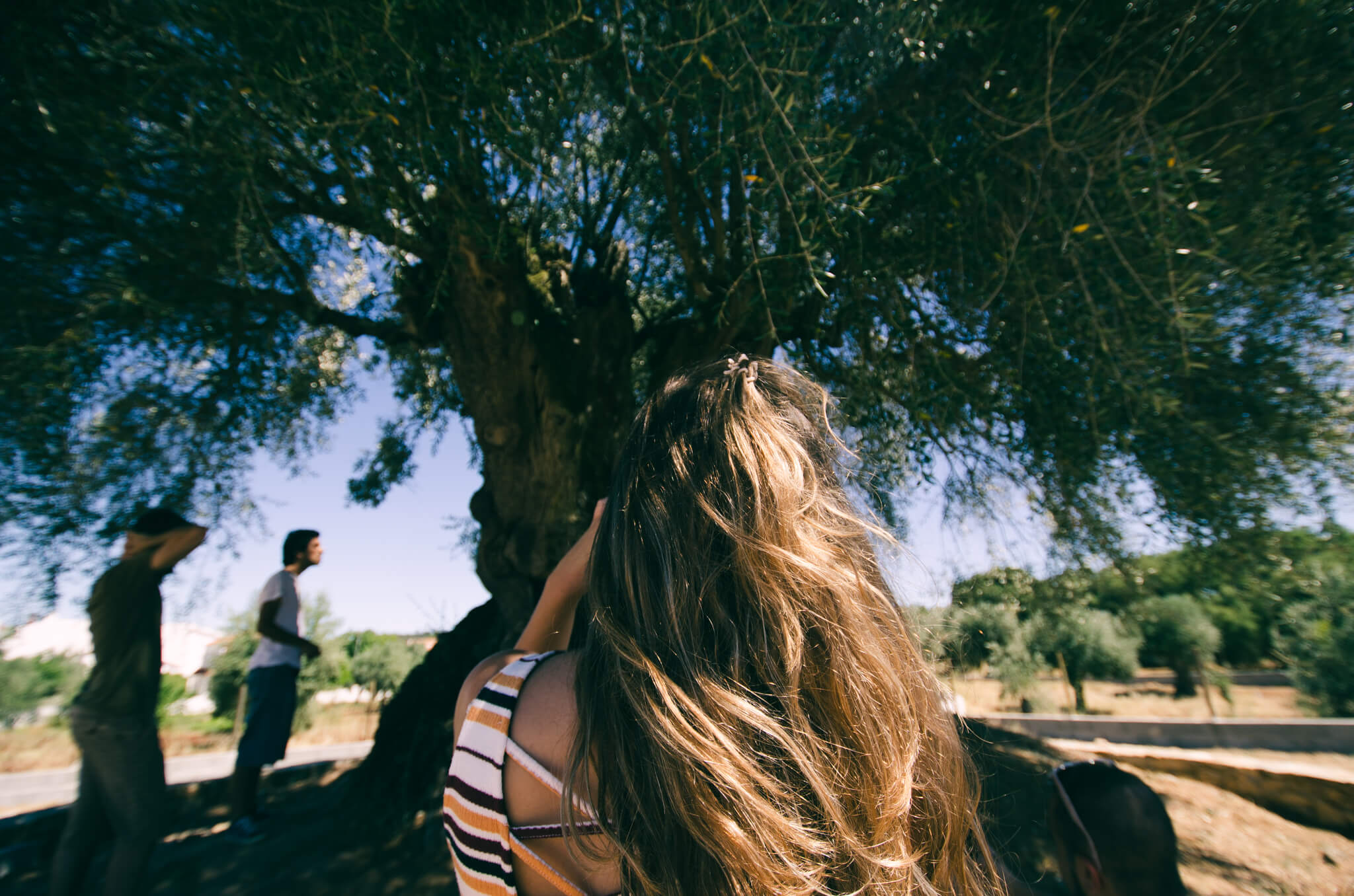 meeting-an-ancient-tree-breathe-portugal.jpg