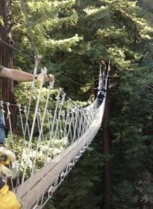 Bridge in the trees