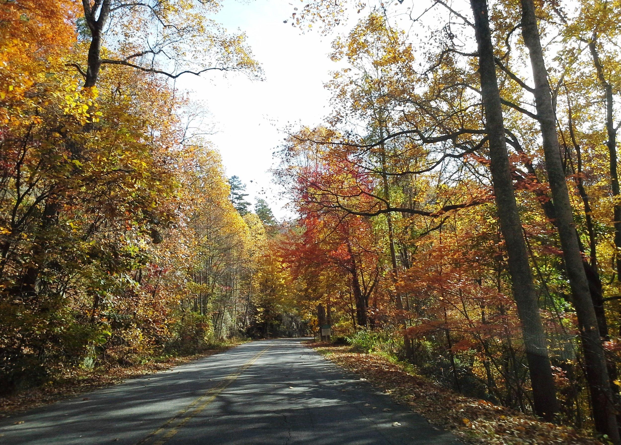 Autumn drive 14.jpg