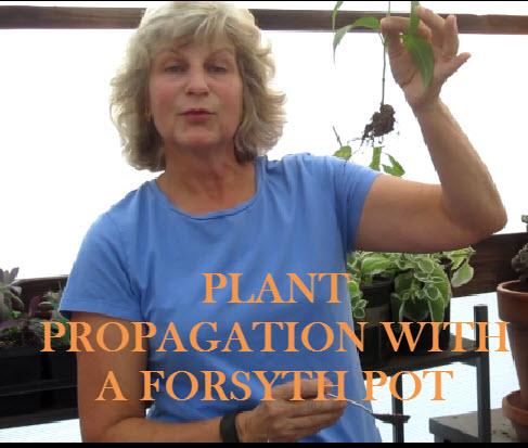 YouTube Thumbnail-Forsyth Pot.jpg