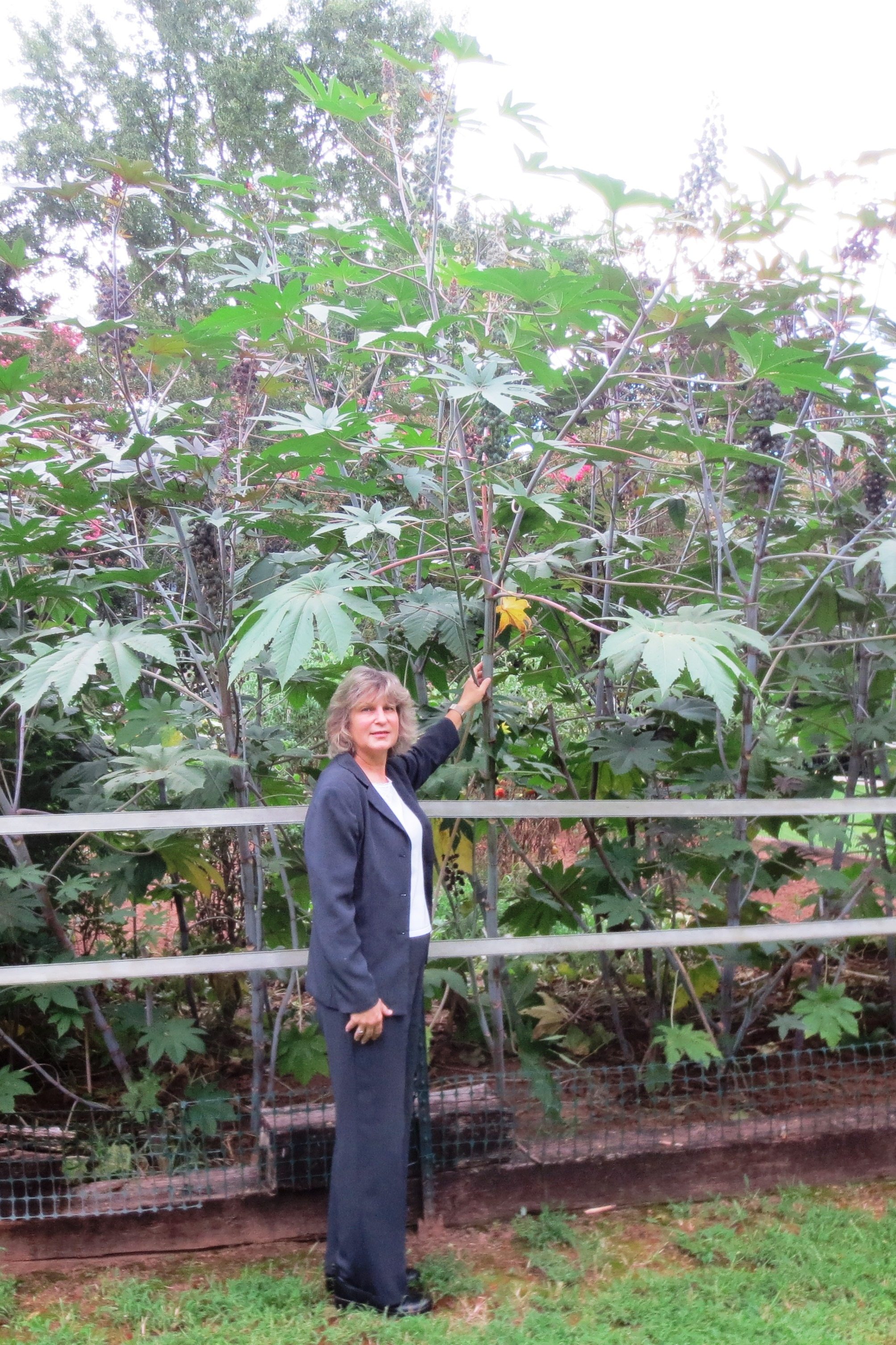 Mary Snoddy with Castor Bean plant.jpg