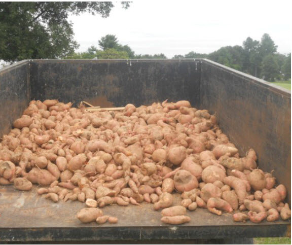 This is what a 4,280 pound harvest looks like.