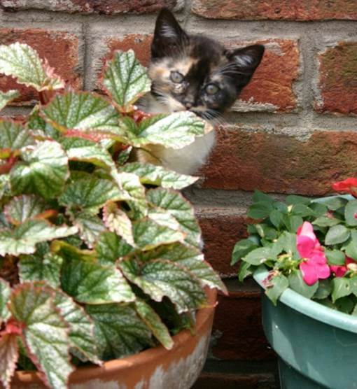 Without the protection of sweetgum balls, containers are fair game for feline frolicking.