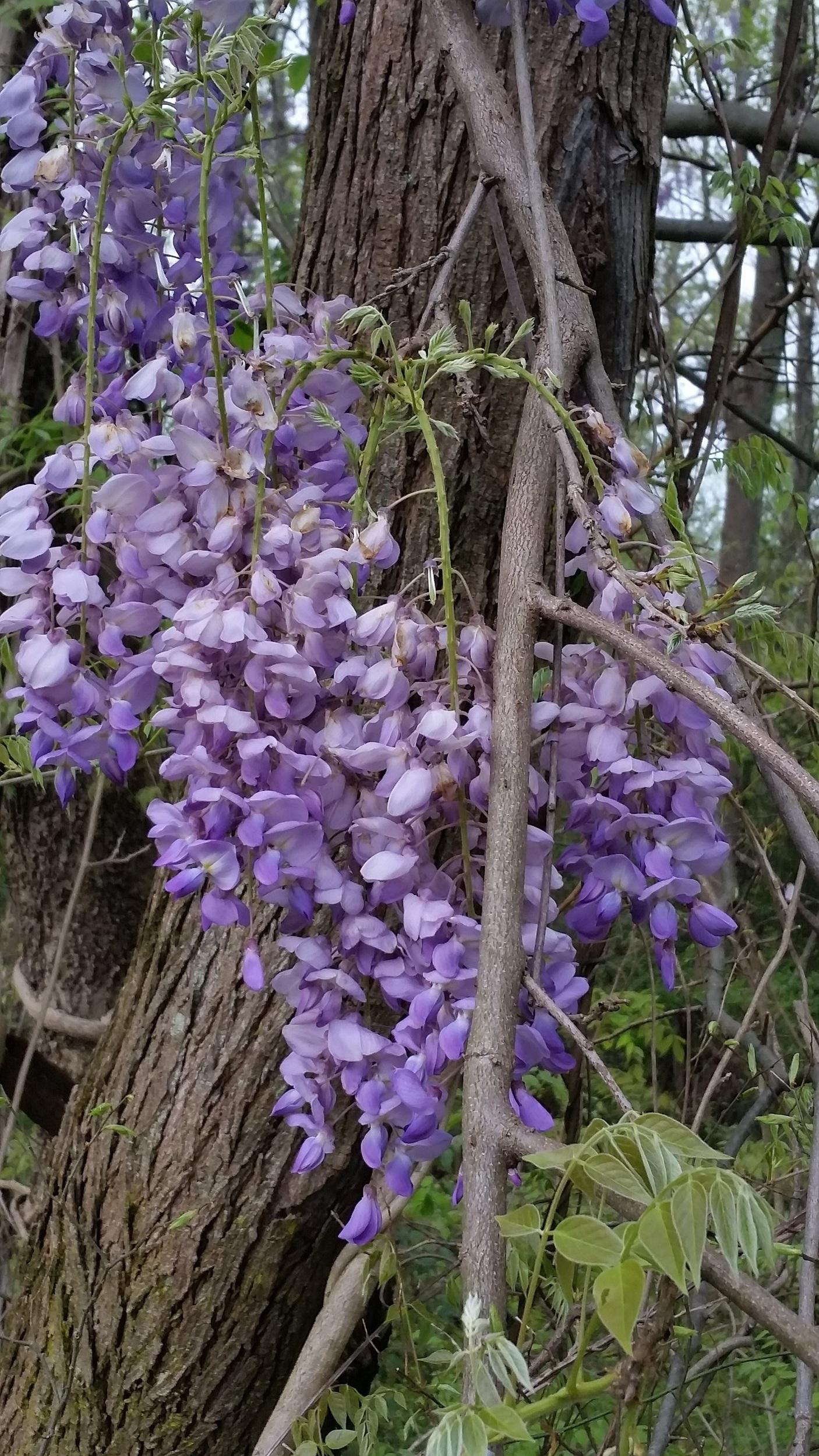 Bloom cluster.