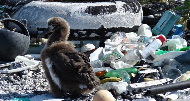 trashy-beach-blog-crop-pic.png