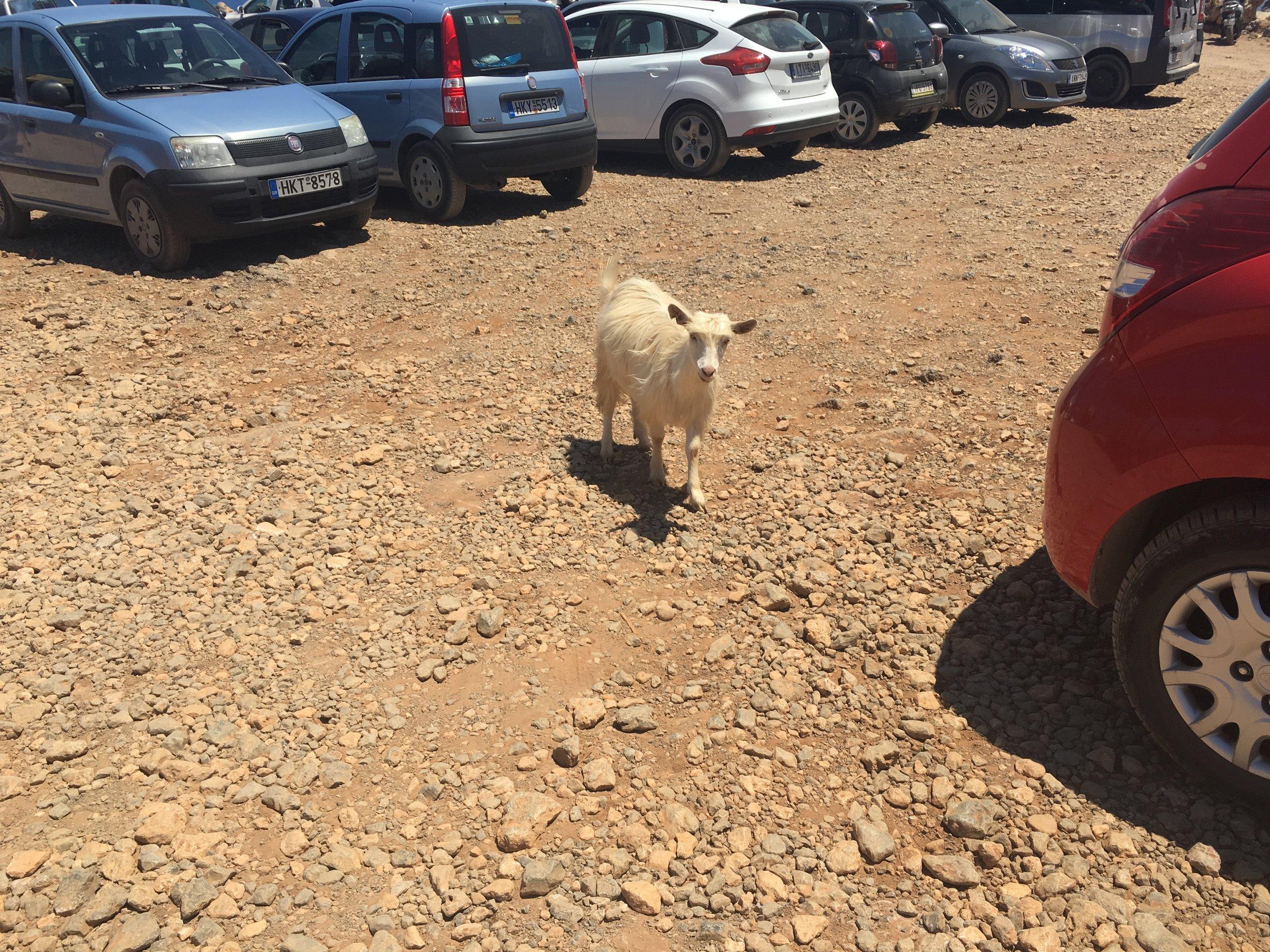 Balos Goat