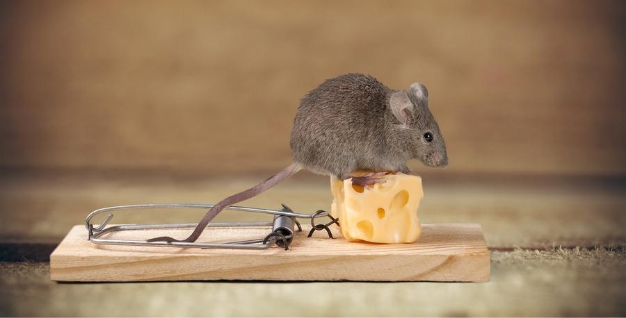 bigstock-Mouse-trap-116151818.jpg