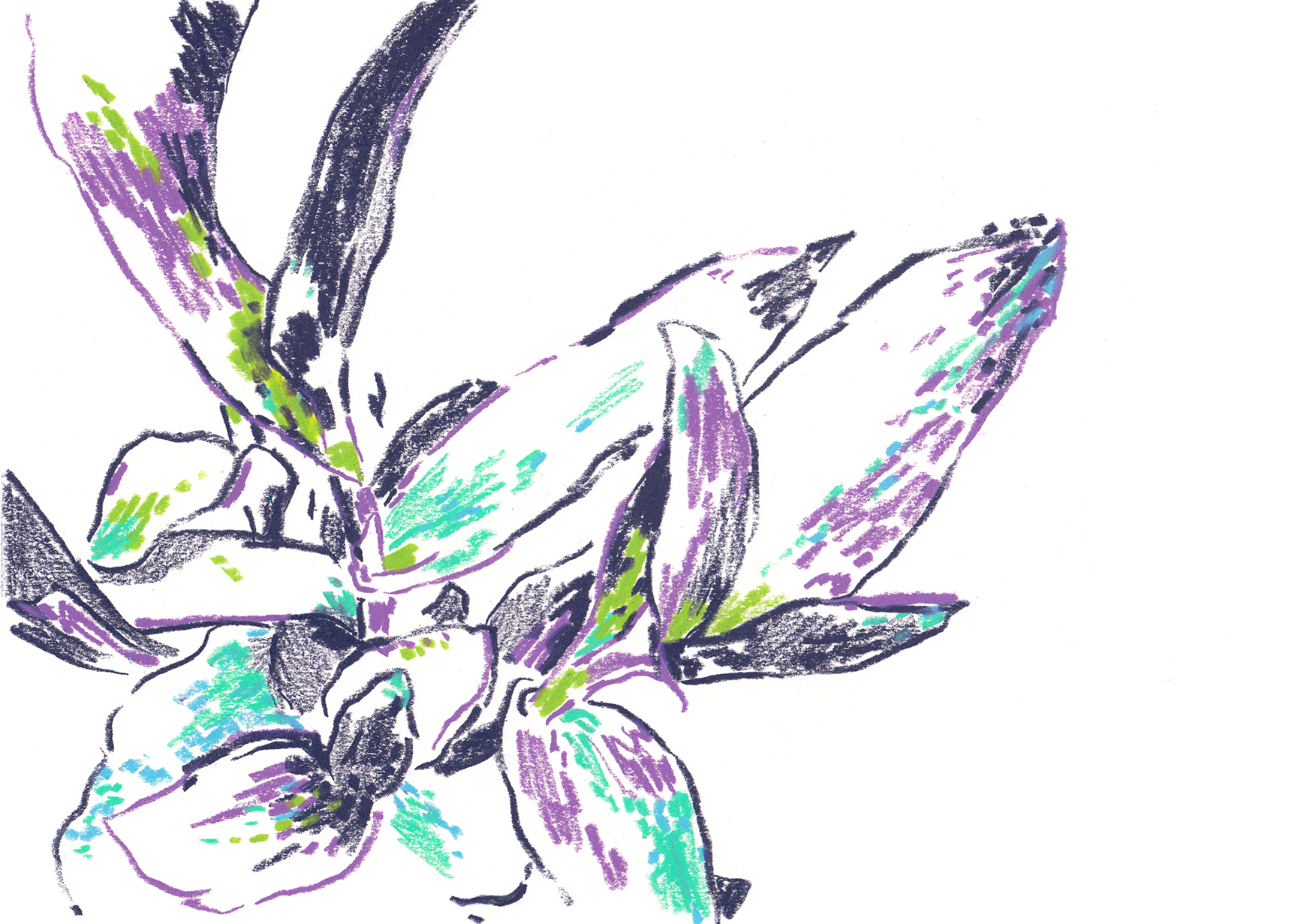 Botanical 7_retouch.jpg