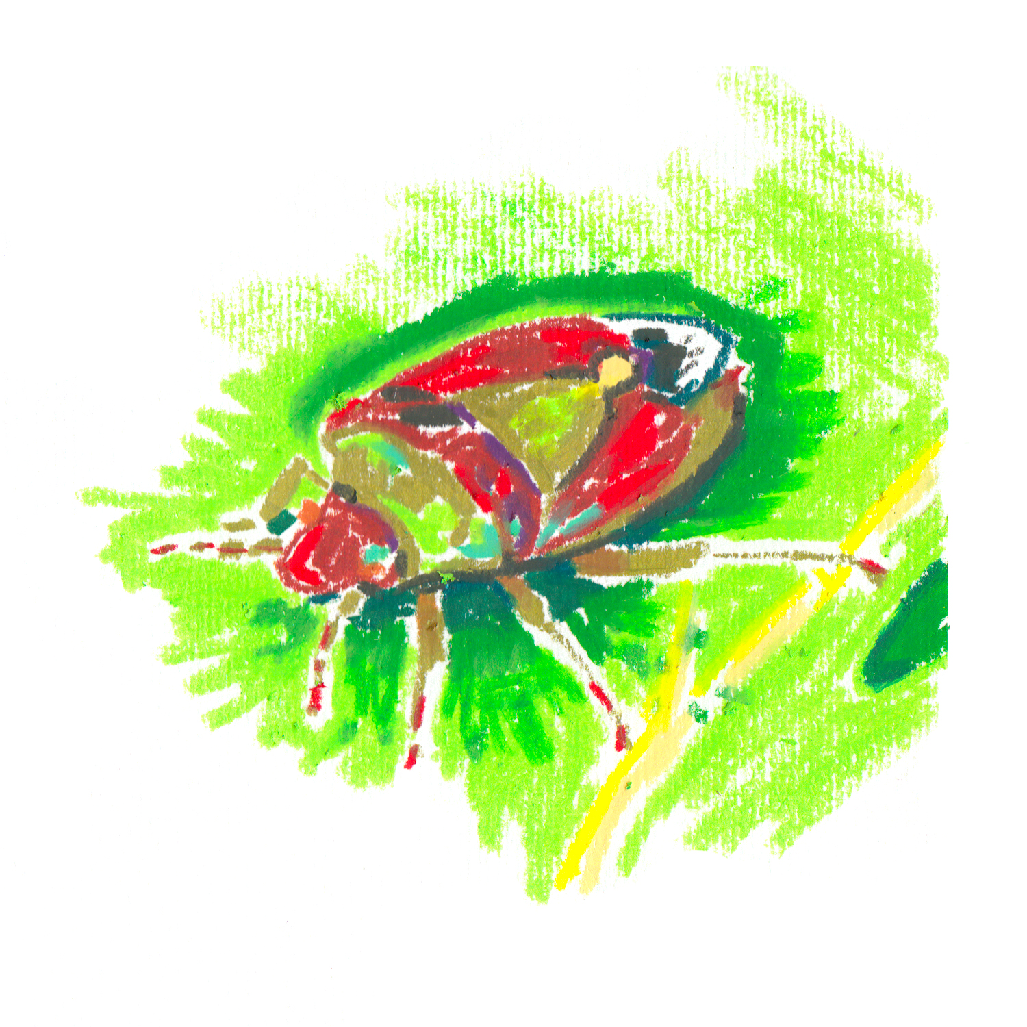 Red And Green Stink Bug.jpg