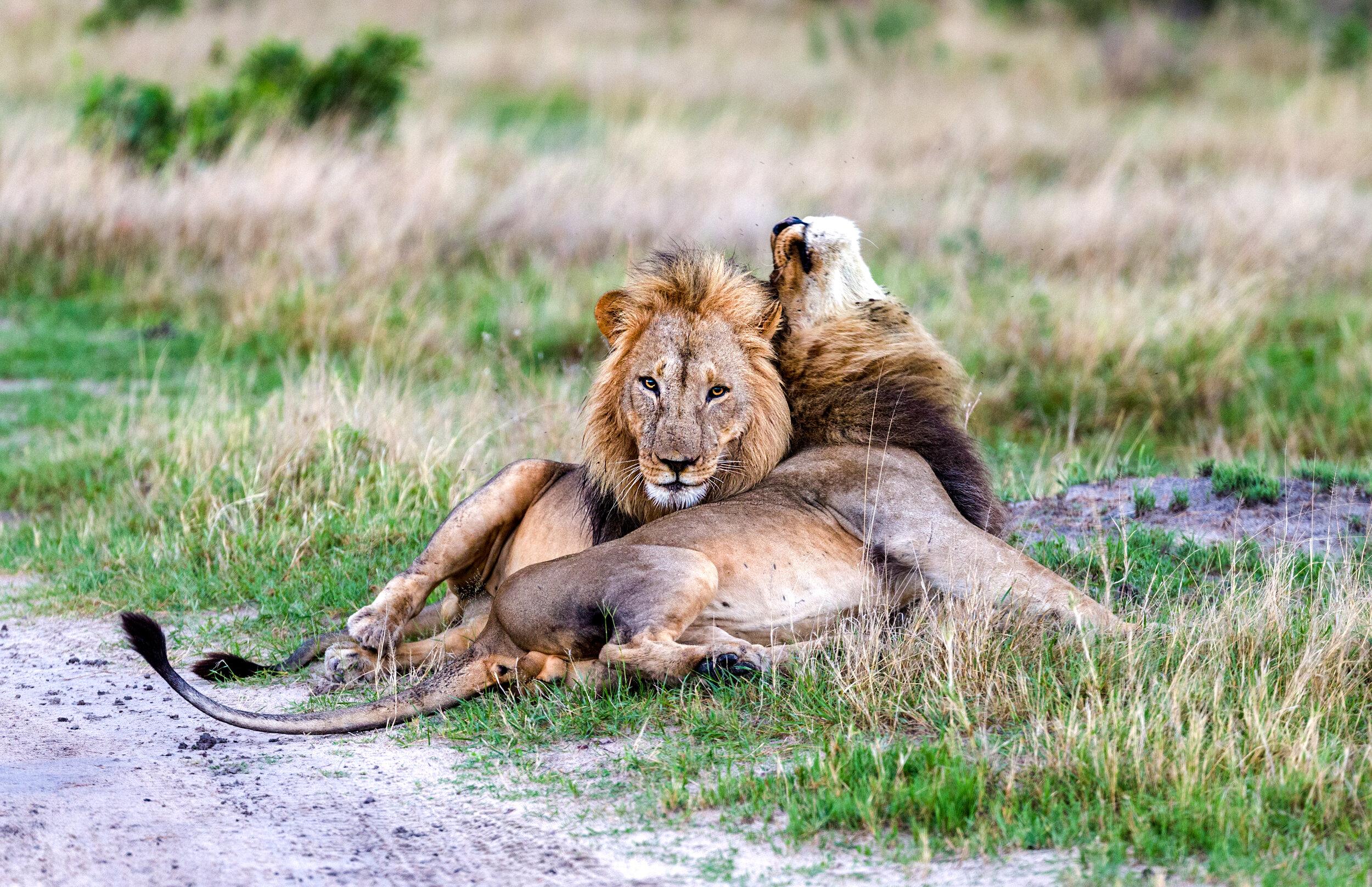 Two brothers bonding in Botswana