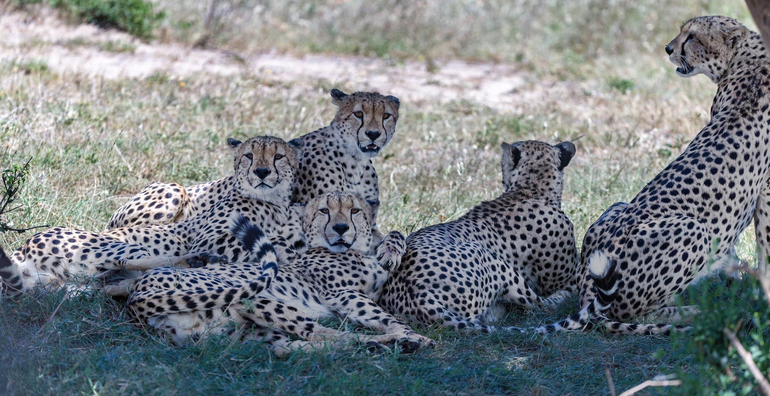 The famous 5 brothers of Masaai Mara, Kenya.
