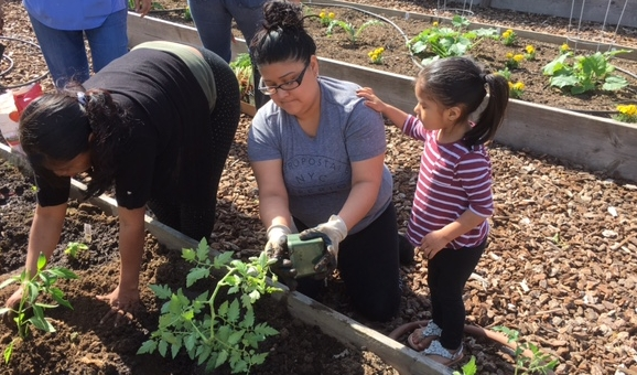 St. jamescommunity garden - Building community and working together to nourish body, soul and spirit.