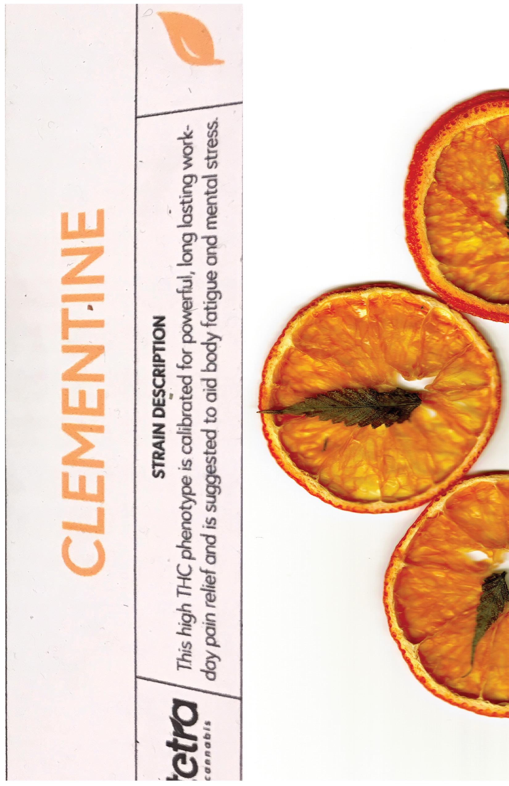 Cheechable_Clementine Gallery10.jpg