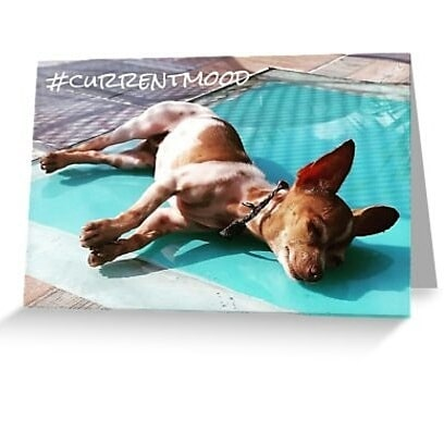 Look at these #Saturday vibes!  The obvious way to use this chilled out maxin', relaxin' card is! when you're on #vacation or even #staycation, but it works just as well when you need to tell someone that you've checked out for the day. Say it right. Say it with a #chihuahua.  Support an #independent #queer #artist and get #originalart #queerart on your #greetingcard or #postcard. I do #custom work #customwork  Link to shop: bit.do/forwardimages  #currentmood #chilledout #dog #puppy #sun #sunbeam #beach #relaxing #relax #happy #travel #Mexico