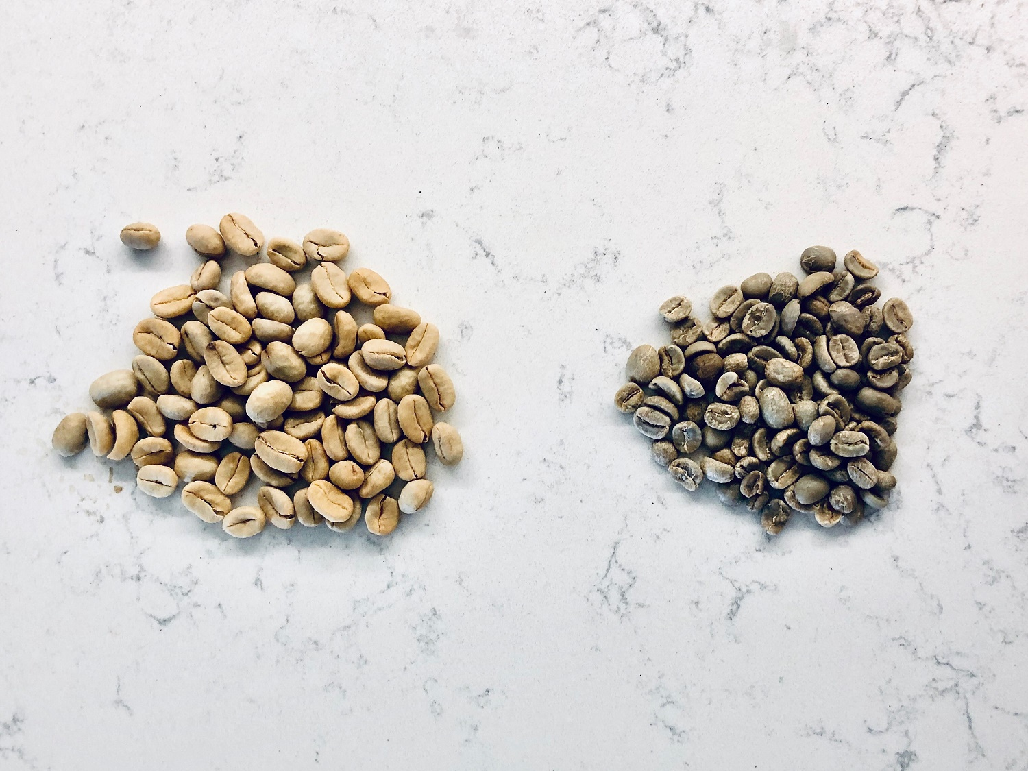 Pergamino (left) and green coffee (right)