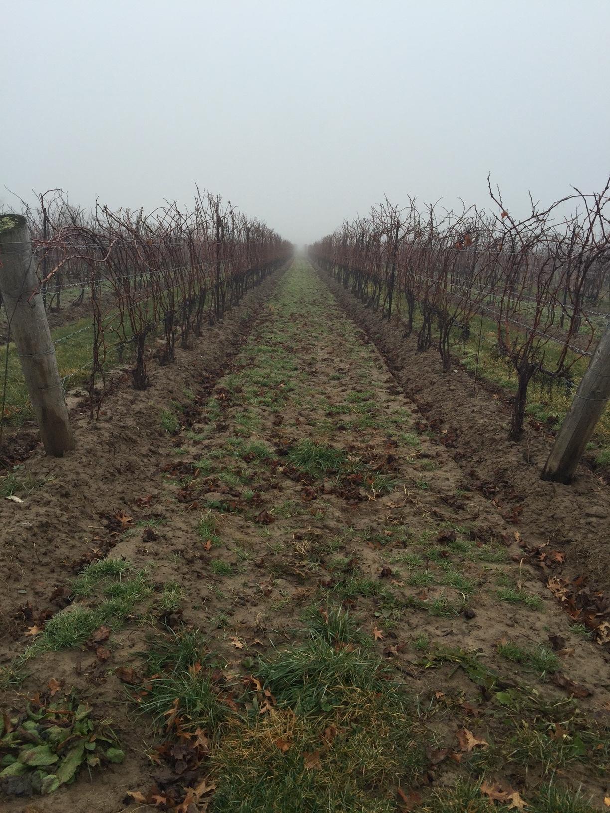 Fog in the Fall TSV.JPG