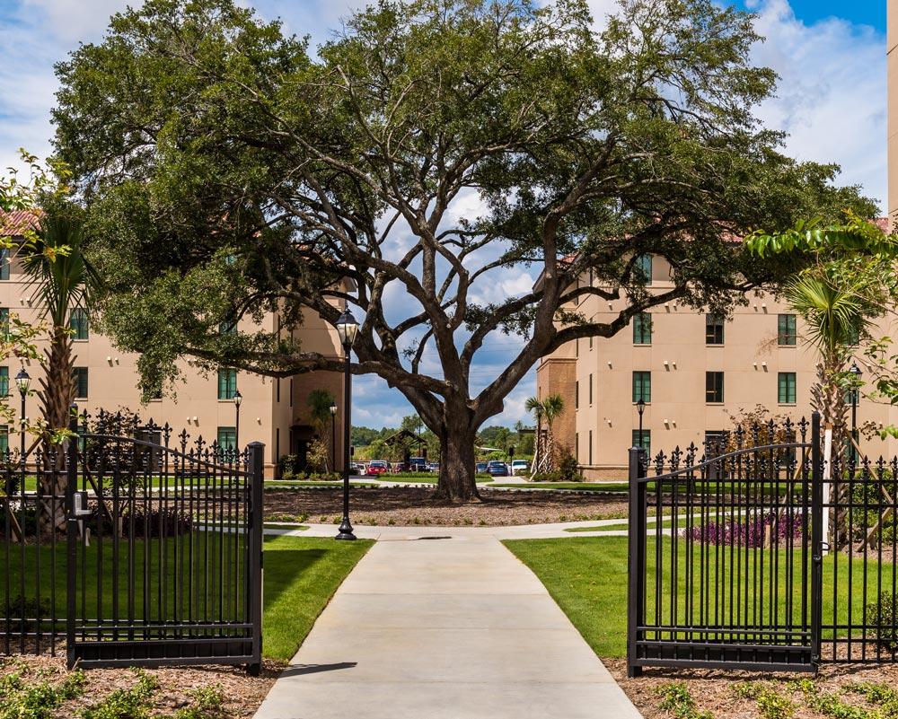 LSU_Gate & Tree.jpg