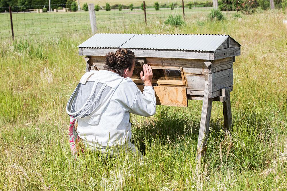 Hive-Share-Program.jpg