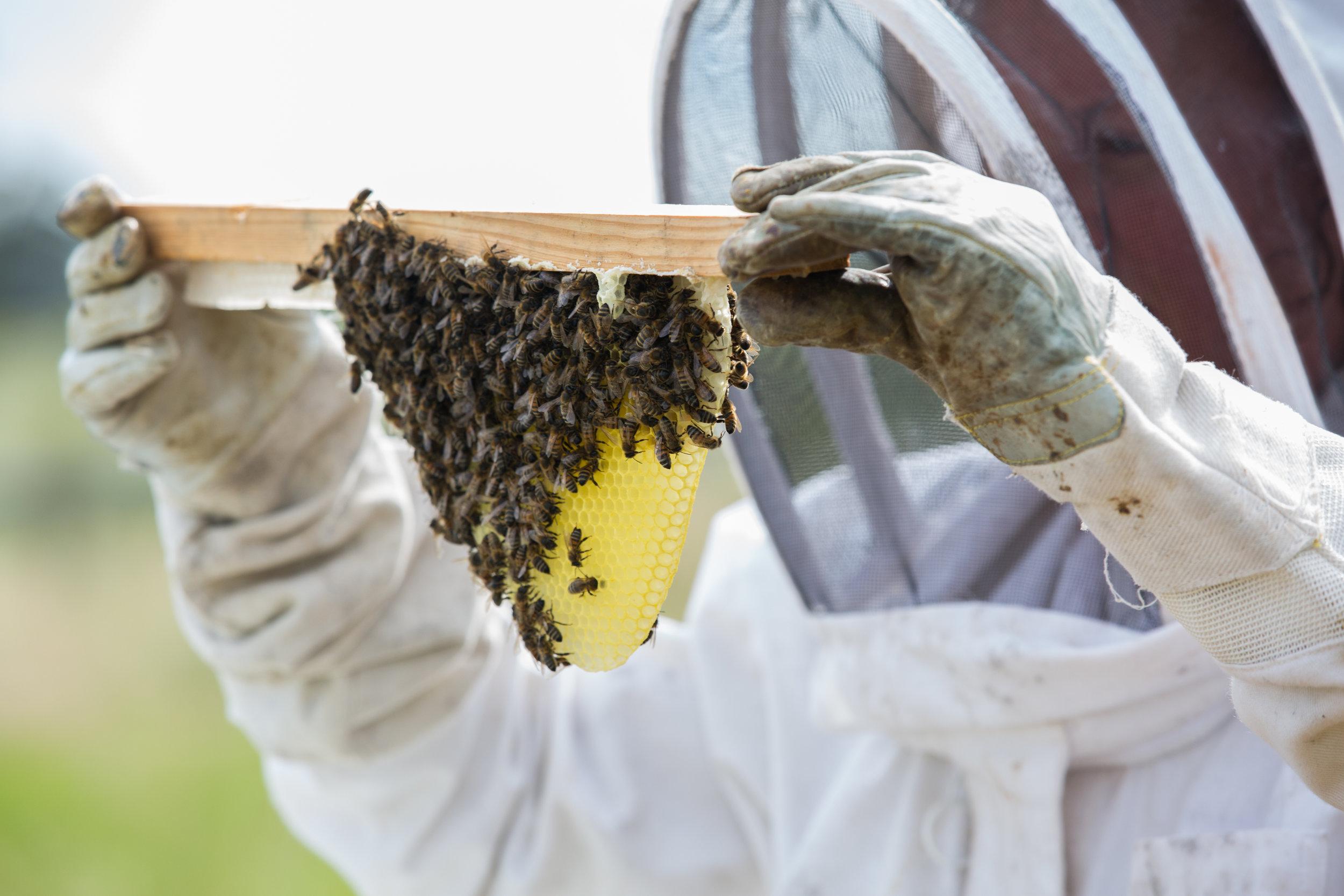 Honey bees on the Good Life Farm Co.jpg