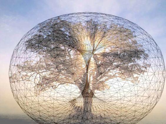 tree toroid.jpg