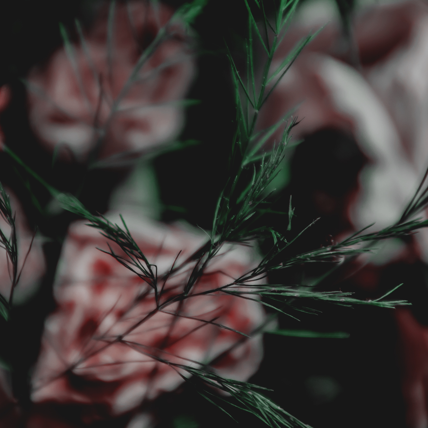 Green Red Moody Florals by KAESPO 004.jpg