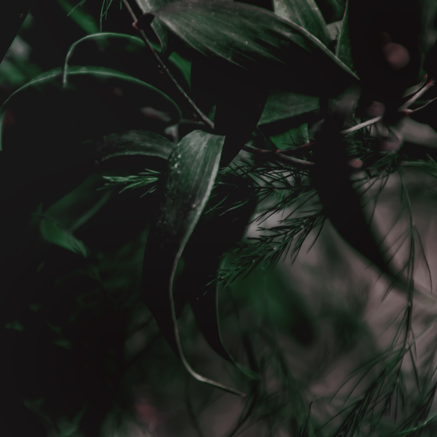 Green Red Moody Florals by KAESPO 005.jpg
