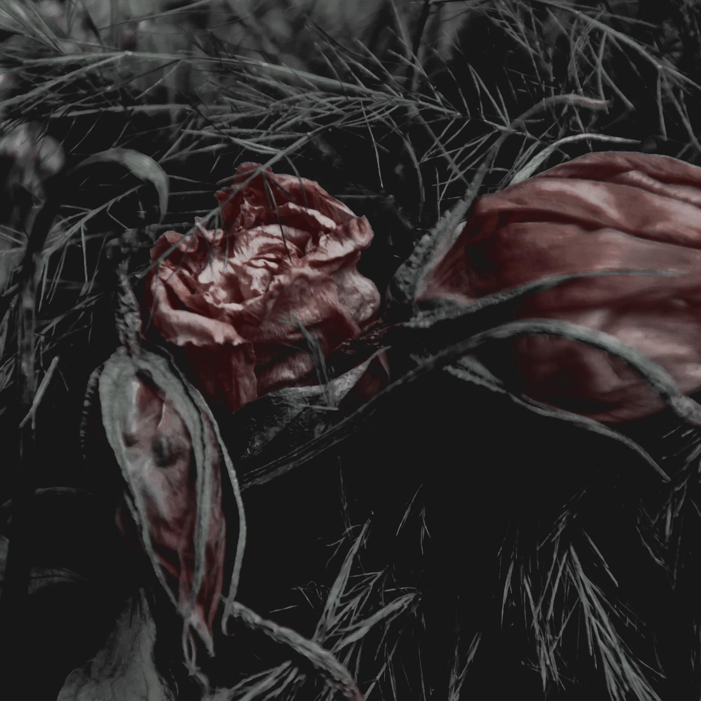 Green Red Moody Florals by KAESPO 006 alt 1.jpg