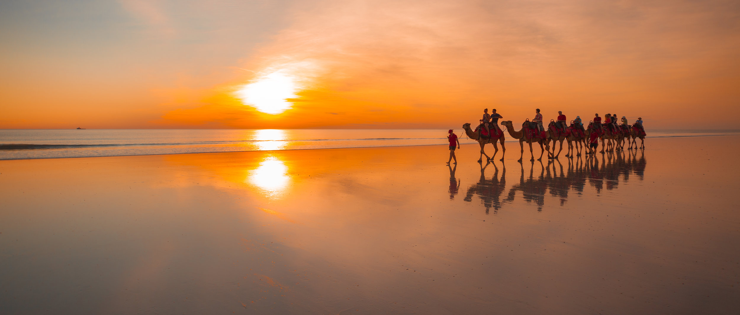 SUNSET CAMELS