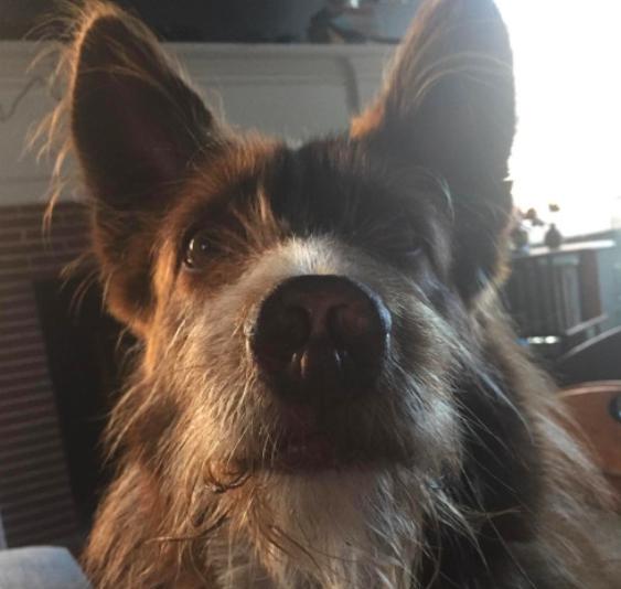 thurman-real-dog-neverending-story