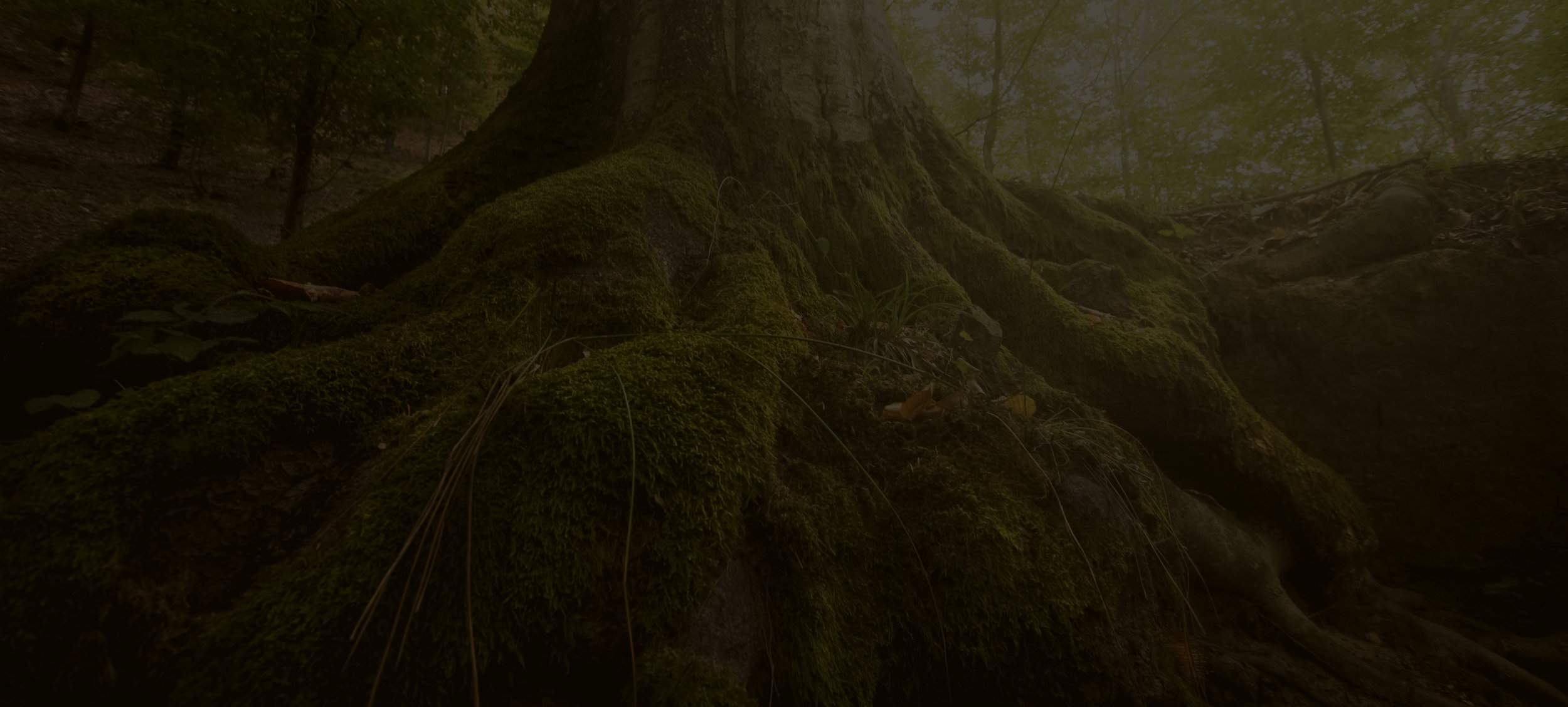 ROOT DEEPLY TO LIVE FREELY -