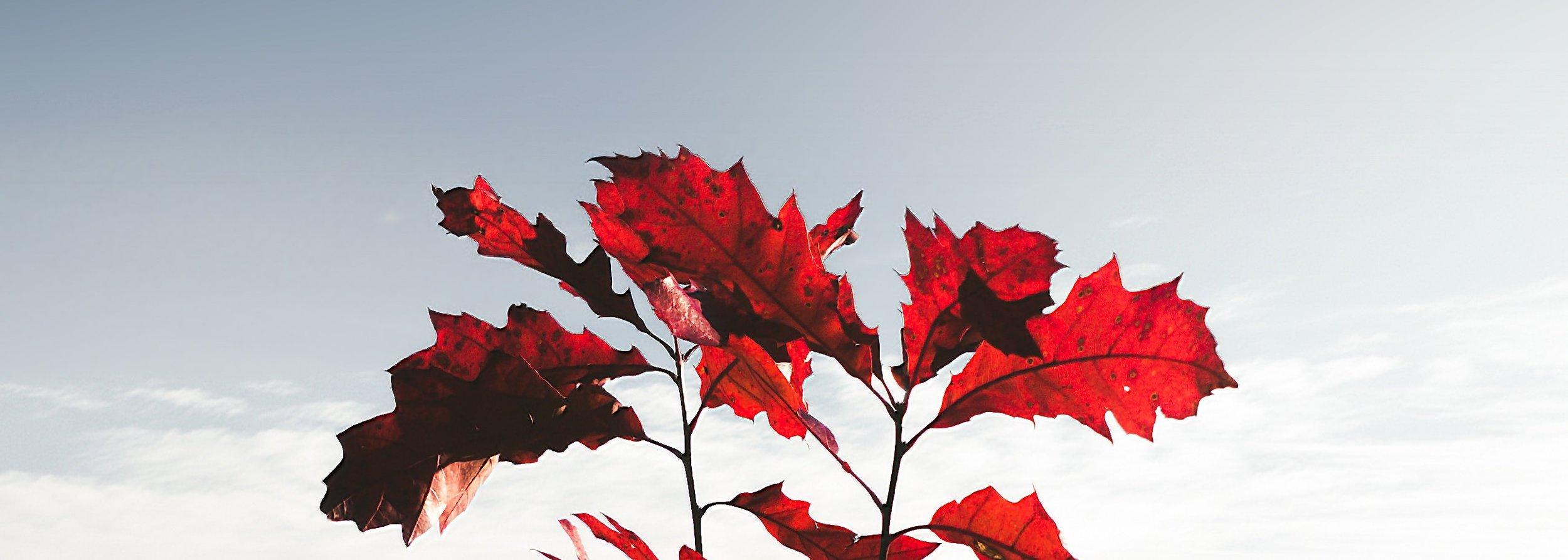 AMSAT Oak Test.jpg
