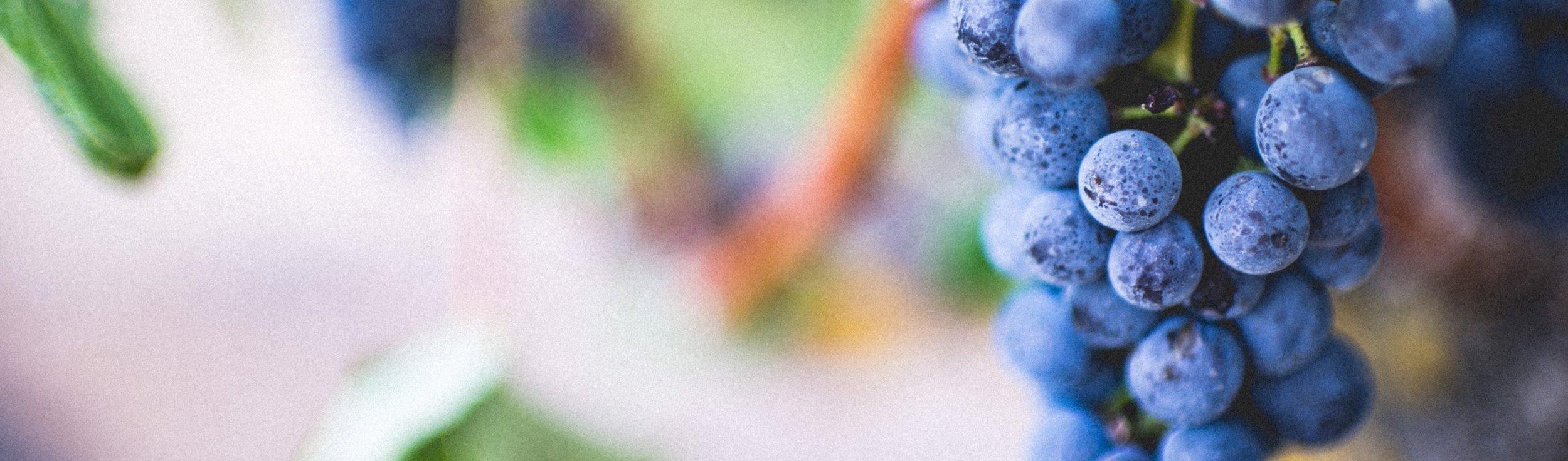 AMSAT Grapes.jpg